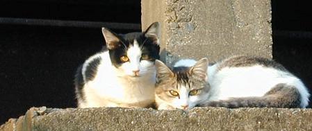 資材置き場の猫たち