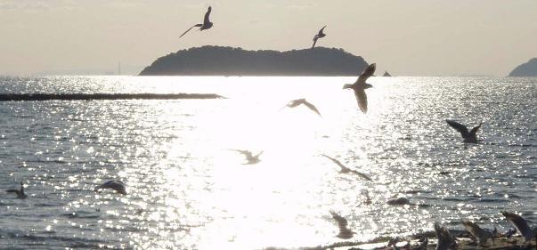 ♪カモメが翔んだ日♪